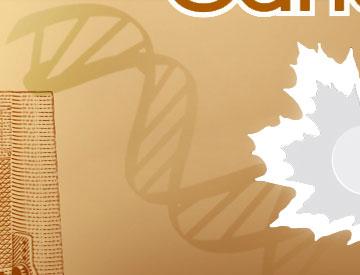 Ce brin d'ADN représente le rôle que les chercheurs canadiens ont joué dans le décodage du génome humain.